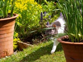 Knott Cottage self catering, Isle of Skye, garden, cat