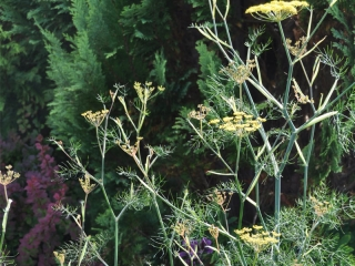 Knott Cottage self catering, Isle of Skye, garden, cow parsley