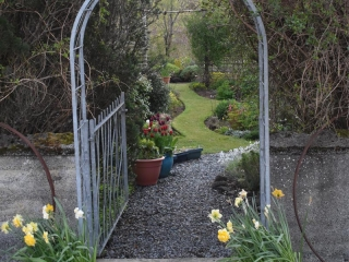 Knott Cottage self catering, Isle of Skye, garden, daffodils