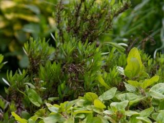 Knott Cottage self catering, Isle of Skye, garden, herbs