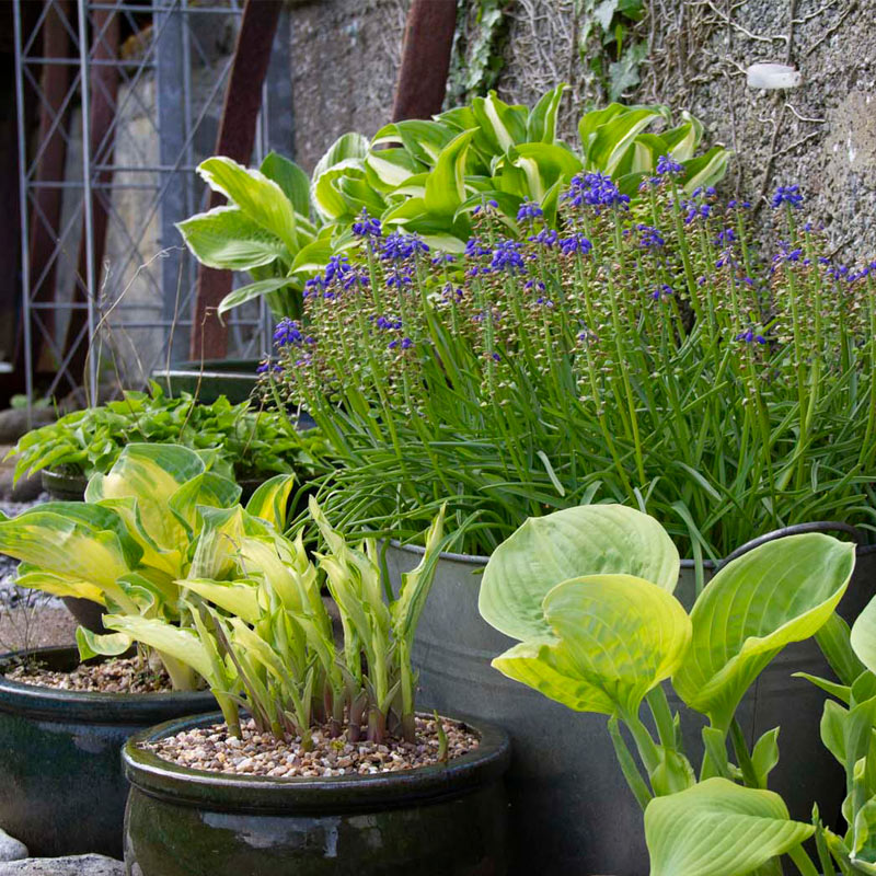 Knott Cottage self catering, Isle of Skye, garden, plantpots