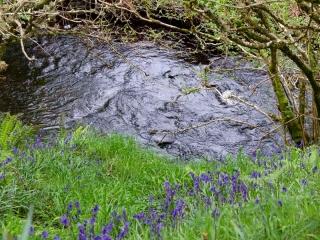 Knott Cottage self catering, Isle of Skye, garden, river, bluebells