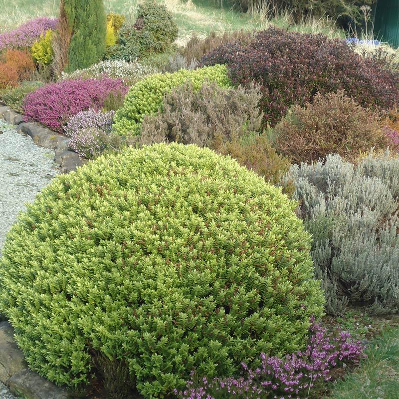 Knott Cottage self catering, Isle of Skye, garden, shrubs